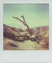 Polaroid Of A Fallen Tree.