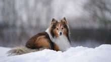 Cute Dog On The Snow
