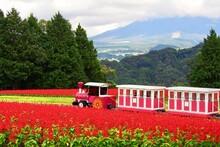 Tottori Prefectural Flower Park, Japan