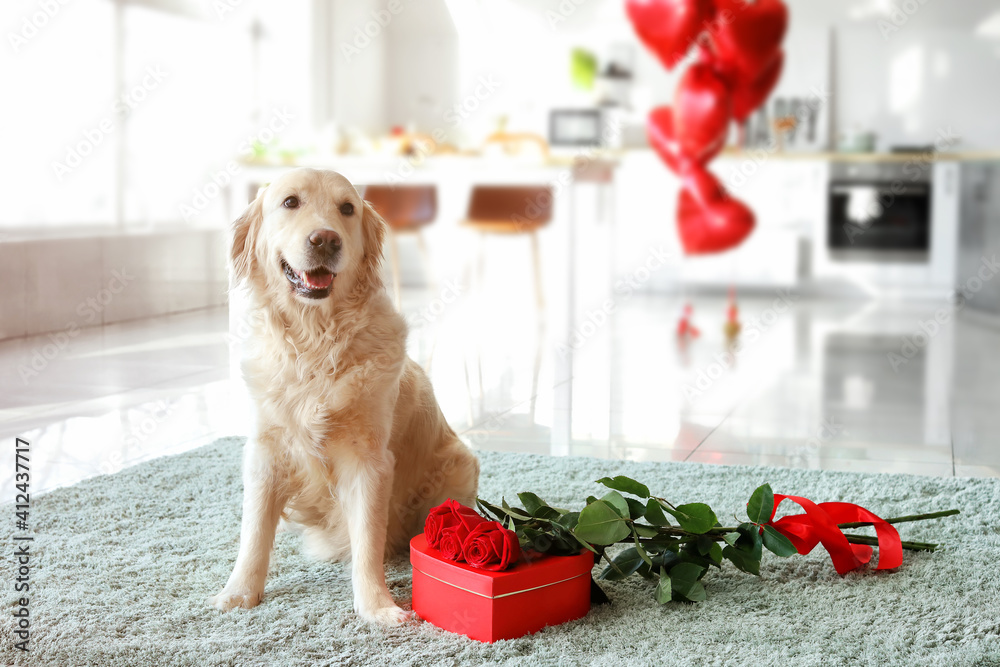 Fototapeta Cute dog with gift and flowers at home. Valentine's Day celebration