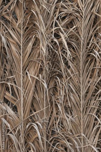Fotografija Full Frame Shot Of Crops