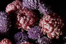 Bouquet Of Pink With Purple Aster Flowers In Light And Shadow, Floral Botanical Design With Dark And Moody Background, Baroque Light, Closeup, Copy Space