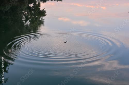 Foto Wild Brenta River