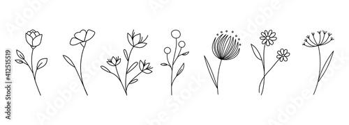 Valokuva Botanical linear flower set