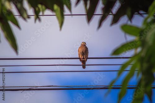 Fotografie, Obraz Passarinho no fio de energia.