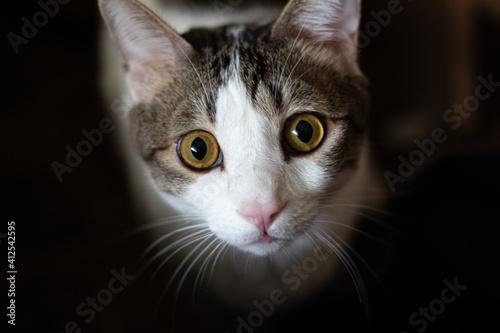 Obraz na plátně Macro de un gato