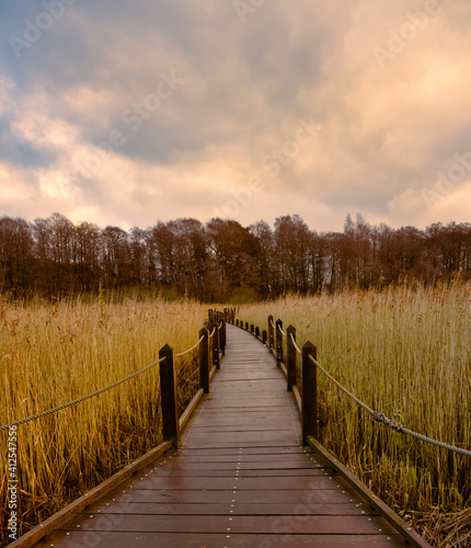 Fototapeta A boardwalk in a marshland full of reeds in golden color with an amazing sky in the background