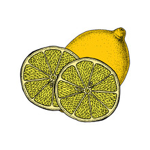 Lemon. Citrus Fruits. Vintage Ink Illustration. Hand Drawn Vector Image For Packaging Organic And Natural Products
