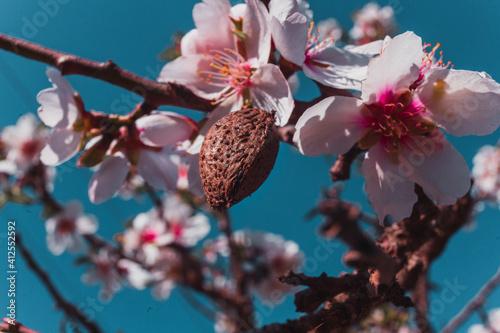 Tableau sur Toile Flor de almendro
