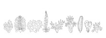 Seaweeds. Underwater Hand Drawn Sea Plants, Ocean Plants, Coral Elements, Algae. Vector Illustration. Aquarium Sea Weed Black Line Isolated Set, Collection.