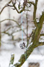 Bird Feeder - A Branch Of A Tree And On It Is Tied A Blue String With A Cone, Which Is Covered With Sunflower Seeds And Tallow.