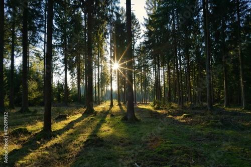 Fototapeta landscape in thuringia in autumn obraz na płótnie