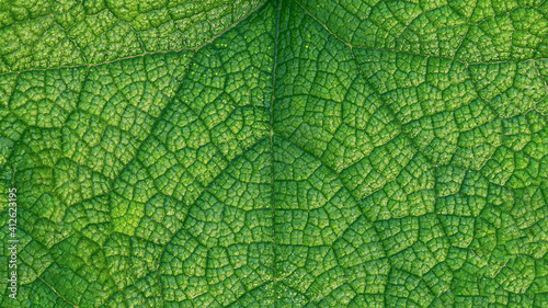 Canvas Print Close-up of a leaf textured background, beautiful nature texture concept