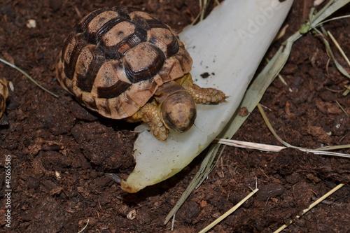 Photo tortue sur un os de seche