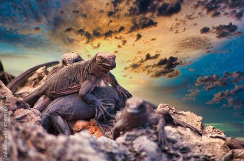 Obraz na plátně Lizards On Rock Against Sky