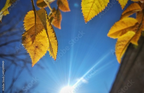 Fotografie, Obraz Low Angle View Of Autumnal Leaves Against Blue Sky