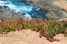 Close-up Of Plants Growing On Beach
