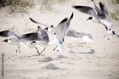 Fotografie, Obraz Birds At Sea