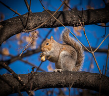Squirrel On A Tree With Blue Sky Background