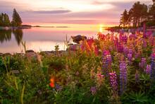 Purple Flowers Against Sky At Sunset
