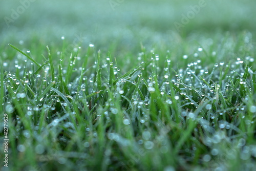 Fotografia close up of dew on short mowed grass in large sports ground
