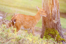 Deer In The Woods. High Quality Photo