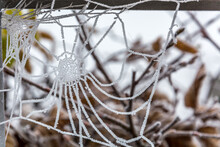 Close-up Of Frozen Spider Web