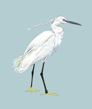 Realistic Standing Egret Illustration In Vector Art