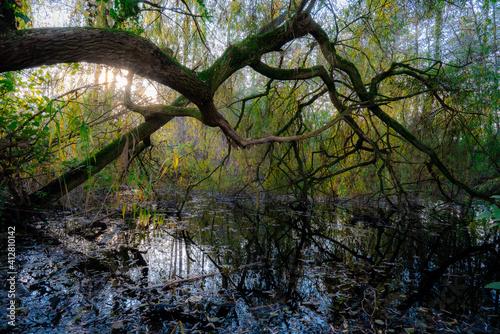 Fototapeta Les marais du Donk