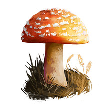 Amanita Rubrovolvata Or Red Volva Mushroom Closeup Digital Art Illustration. Boletus Has Reddish Orange Cap With Ring. Mushrooming Season, Plant Of Gathering Plants Growing In Woods And Forests.