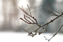 Abstract Photo With Blurred Background Of A Dry Branch In Winter