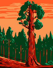 WPA Poster Art Of The General Grant Tree, A Giant Sequoia Sequoiadendron Giganteum In Kings Canyon National Park  In California Done In Works Project Administration Or Federal Art Project Style.
