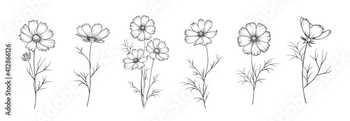Set of differents flowers on white background. Fototapet