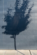 Tree Shadow On A Building Wall