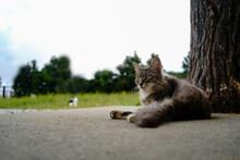 長毛猫が休憩中 屋外