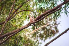 Pássaro Na árvore.