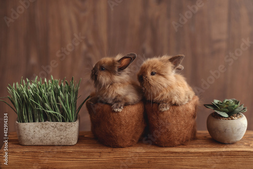 Fotografering 2 small rabbits in flowerpots