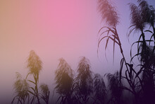 Bunches Of Tall Grass Flowers In Multicolor Light Of Quiet Dawn. A Silhouette Image In Cool Pastel Tone With Copy Space For Text.