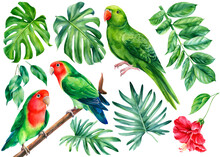 Parrots And Tropical Plants. Monstera Leaves, Hibiscus Flower, Hand Drawing, Watercolor Botanical Painting