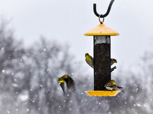 Birds Flying Around A Yellow Bird Feeder In The Snow