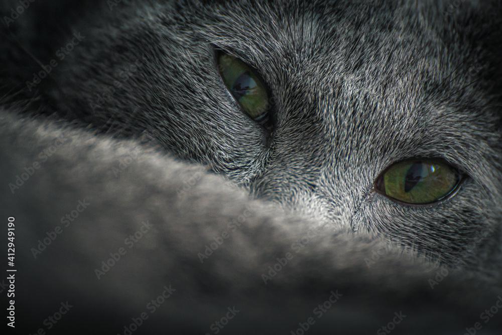 Fototapeta russian_blue