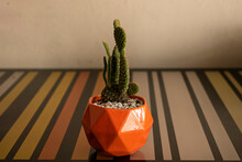 Cactus En La Mesa. Reflejo De Cactus.