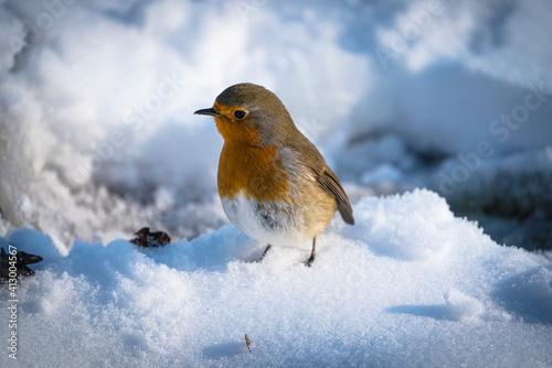 Fotografie, Obraz Un rouge gorge dans de la neige
