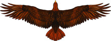 The Brown Of An Eagle Vector Illustration
