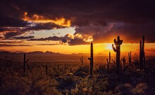 Scenic View Of  Saguaro Cactus Silhouette Field Against Sky During Sunset