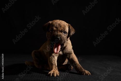 Fototapeta Puppy Photo Session - Black Background