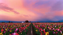 Flowers Growing In Field Against Sky During Sunset