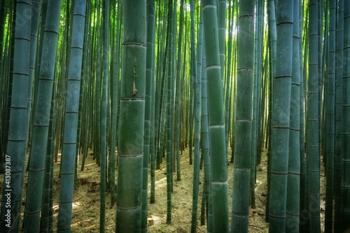 Tela Full Frame Shot Of Bamboos
