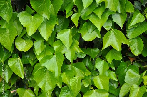 Full Frame Shot Of Plants Fototapet
