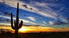 Silhouette Saguaro Cactus Against Sky During Sunset